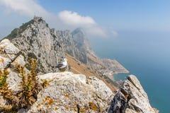 Bella vista della città di Gibilterra Immagine Stock