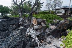 Bella vista della costa di Kohala sulla grande isola delle Hawai Fotografia Stock