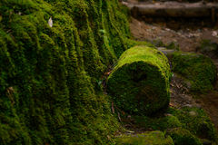 Bella vista della foresta verde misteriosa Immagine Stock