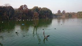 Bella vista della riva del lago Fotografie Stock Libere da Diritti
