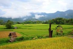 Bella vista della ruota idraulica della risaia Fotografie Stock