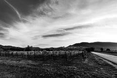 Bella vista della valle dell'Umbria all'alba, con le vigne nella priorità alta, città di Assisi nei precedenti, sotto un profondo Fotografia Stock