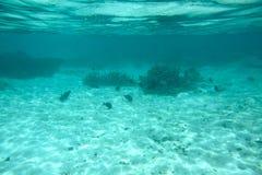 Bella vista delle barriere coralline morte Acqua del turchese e fondo bianco della sabbia Oceano Indiano immagini stock libere da diritti