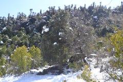 Bella vista delle colline e dei pini innevati fotografia stock