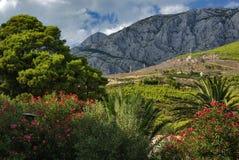 Bella vista delle montagne croate con la palma Immagine Stock Libera da Diritti