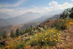 Montagne delle Ande con i fiori Immagini Stock