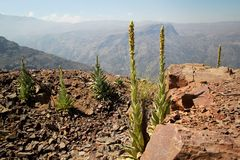 Mountain View delle Ande Fotografie Stock Libere da Diritti