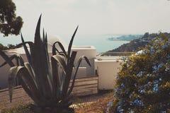 Bella vista delle montagne e della baia sul terrazzo Balcone con i fiori Immagine Stock Libera da Diritti