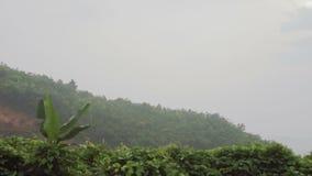 Bella vista delle montagne verdi nella foschia video d archivio