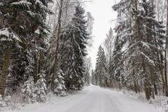 Bella vista di giorno di inverno con la strada vuota e la foresta innevata fotografie stock