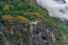 Bella vista di paesaggio e del paesaggio del fiordo in un giorno nuvoloso, Norvegia Fotografie Stock Libere da Diritti