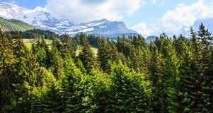 Bella vista di rilassamento di giorno di estate dell'abetaia naturale con le alpi europee come fondo Fotografia Stock