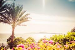 Bella vista di stupore del paesaggio tropicale con le palme esotiche immagine stock libera da diritti