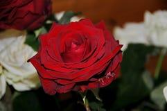 Bella vista di un fiore Immagini Stock