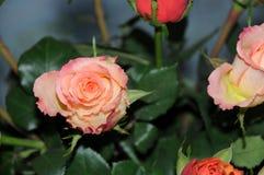 Bella vista di un fiore Immagine Stock