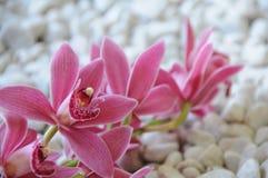 Bella vista di un fiore Fotografia Stock