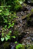 Bella vista di una cascata nelle montagne Immagine Stock Libera da Diritti