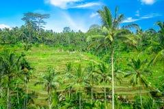 Bella vista panoramica con i terrazzi verdi del riso vicino al villaggio di Tegallalang, Ubud, Bali, Indonesia Fotografia Stock Libera da Diritti