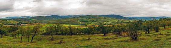 Bella vista panoramica sopra il frutteto della prugna Fotografia Stock
