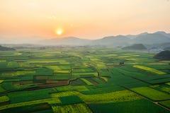 Bella vista panoramica sui giacimenti e sulle colline del seme di ravizzone in Luoping durante il sunet immagini stock