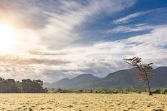 Bella vista panoramica sul campo e sulle colline del pascolo con l'albero morto solo Cielo blu nuvoloso ed erba asciutta gialla s fotografia stock