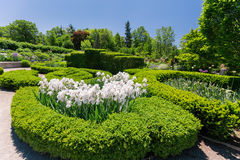 Bella vista piacevole del giardino botanico con i fiori lanuginosi bianchi, paesaggio Immagini Stock