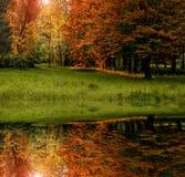 Bella vista riflessione degli alberi e dell'erba nel lago nel parc fotografia stock