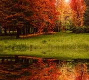 Bella vista riflessione degli alberi e dell'erba nel lago nel parco fotografia stock