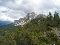 Bella vista su paesaggio dei moutains delle dolomia e su una foresta di gree nella parte anteriore Il Tirolo del sud, Italia, alp Fotografia Stock Libera da Diritti