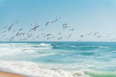 Bella vista sul mare nei colori del turchese e del blu e stormo degli uccelli, linea costiera di California fotografie stock libere da diritti