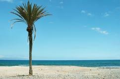 Bella vista sul mare tropicale con la palma e la spiaggia Fotografia Stock Libera da Diritti