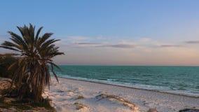 Bella vista sul mare variopinta con le palme sulla spiaggia sabbiosa stock footage