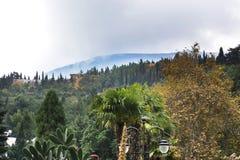 Bella vista sulla montagna e sulla foresta fotografie stock