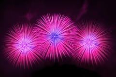 Bella visualizzazione dei fuochi d'artificio Immagini Stock