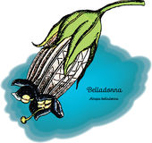Belladone 2 Photos stock