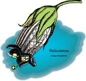 Belladonna 2 illustrazione vettoriale