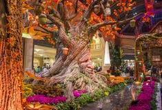 Bellagio-Hotel-Konservatorium u. botanische Gärten Lizenzfreies Stockfoto
