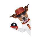 Bellboy dog Royalty Free Stock Image