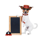 Bellboy dog. Jack russell bellboy dog holding a blank and empty blackboard at hotel, where pets are welcome and allowed,isolated on white background stock photos