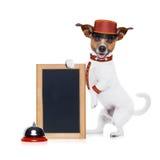 Bellboy dog Stock Photos