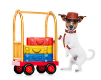Bellboy dog Stock Images