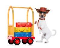 Bellboy dog Stock Images