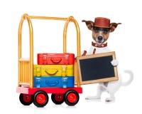 Bellboy dog Royalty Free Stock Photography