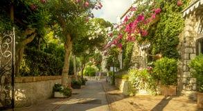 Belle allée complètement des arbres et des fleurs sur l'île de Capri, Italie Photos libres de droits
