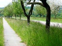 Belle allée d'arbre avec la route de campagne et le chemin de vélo Images libres de droits