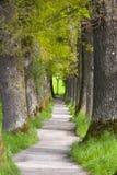 Belle allée de chêne avec le sentier piéton photos stock