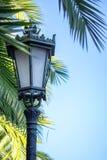 Belle allée de palmier avec des lanternes de cru en parc en automne image stock