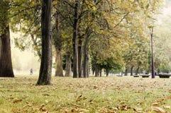 Belle allée romantique en parc avec les arbres colorés et le fond naturel d'automne de lumière du soleil photos stock