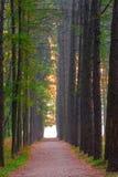 Belle allée dans la forêt Image stock