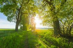 Belle allée des arbres sur la vieille route arénacée oubliée Image stock
